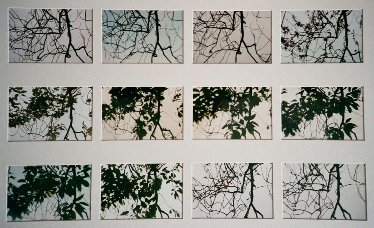 Branches Through the Year – Photography Exhibition by Gunhild Thomson